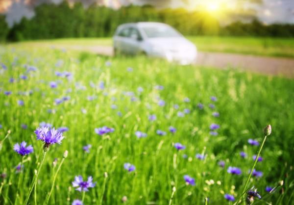 אביב מתעורר – 3 טיולי אביב לקראת הפסח