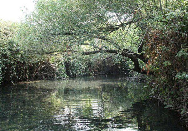 שמורת הטבע מג'רסה