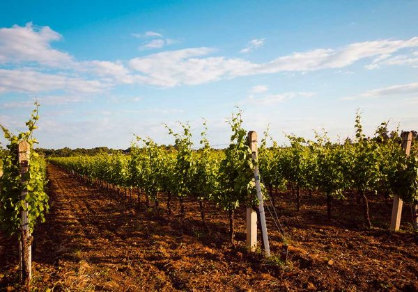 שישי של יין בגולן  | 29.6.18