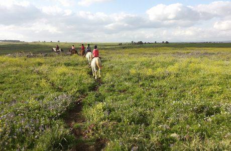 חוות על הסוס בנוב
